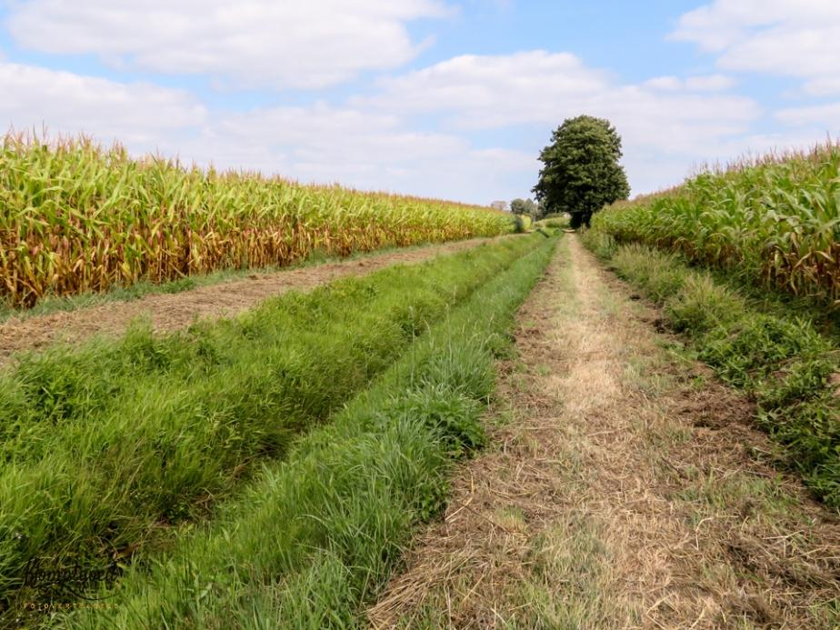 Beltrum, Boerenland wandeltocht